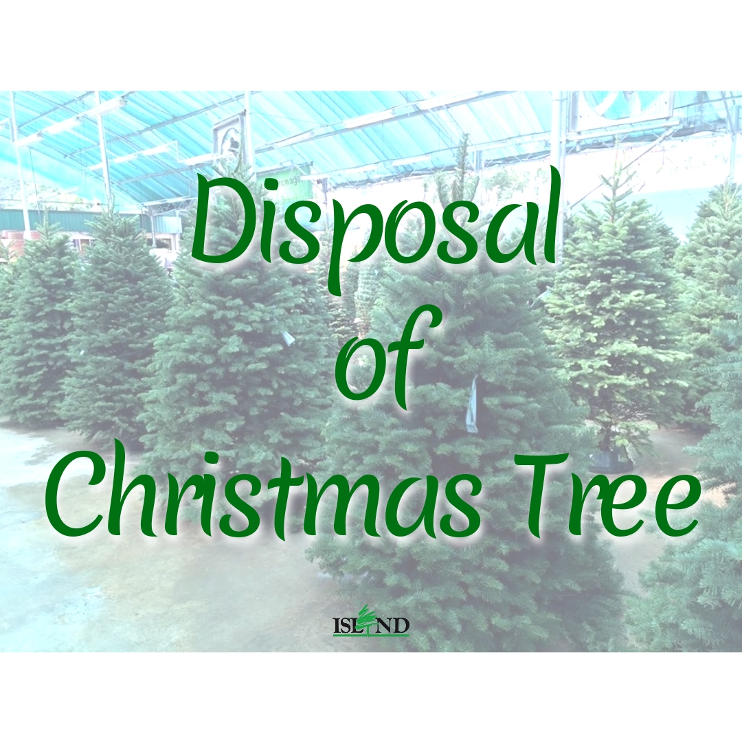 Disposing Of Christmas Trees: DISPOSAL OF CHRISTMAS TREE